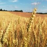 Día Nacional del Celiaco: bases de la intolerancia a ciertos alimentos