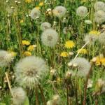 Principales alergias en primavera en personas mayores